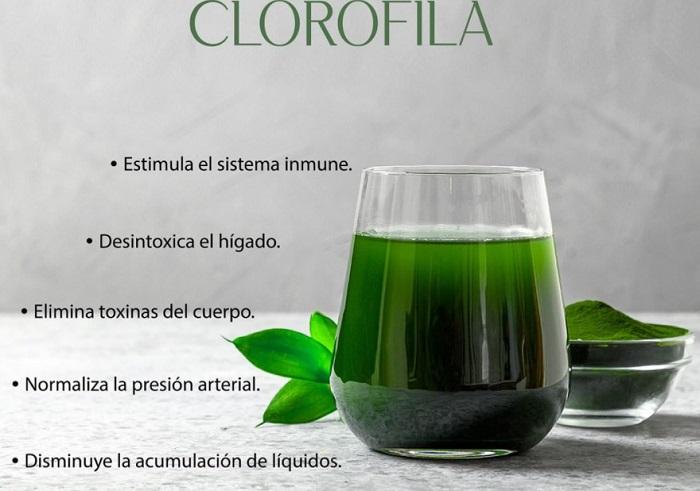Beneficios de consumir clorofila
