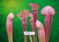 ¿Qué son las plantas heterótrofas? Definición y ejemplos