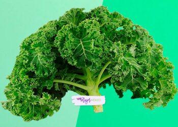 Kale. Qué es, por qué es famoso y cuáles son sus beneficios