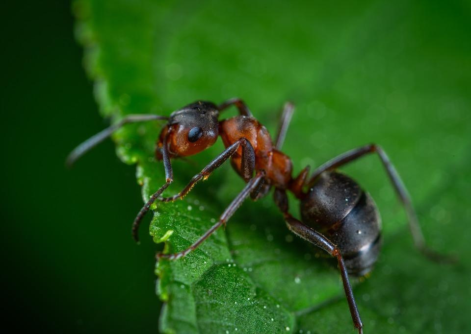 ¿Qué significa soñar con hormigas grandes?