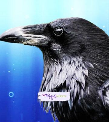 ¿Qué significa soñar con cuervos? Interpretaciones comunes