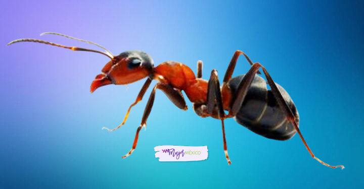 ¿Qué significa soñar con hormigas? Interpretaciones comunes