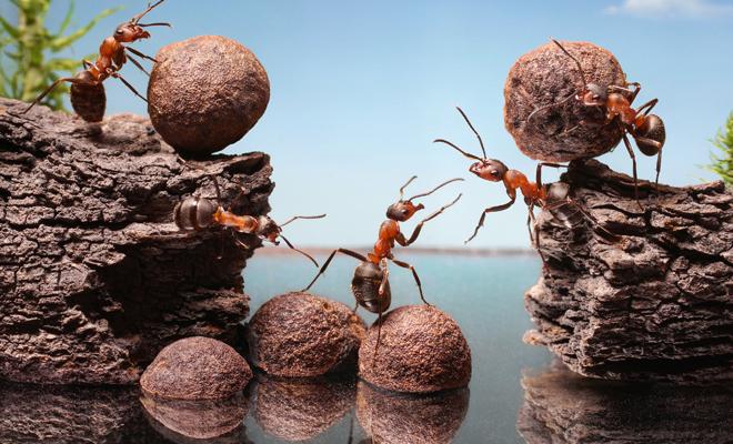¿Qué significa soñar que soy una hormiga?