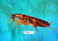 Soñar con cucarachas: significado e interpretaciones